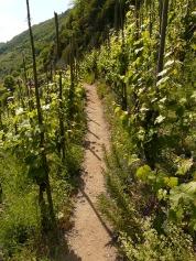 wine-56199_640